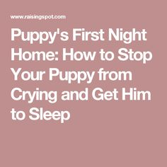 Puppy's First Night Home: How to Stop Your Puppy from Crying and Get Him to Sleep