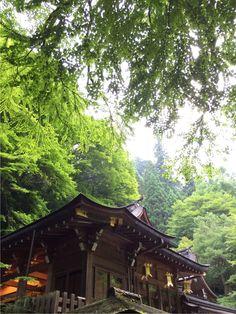 京都。貴船神社。山綠得驚人,快要黃昏的光影竟然篩過葉脈,渲染水彩般的嫵媚。而建築清晰穩重。都安靜了。