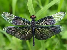 All Totems   Spirit Animal Meanings and Symbolism – Dragonfly ...