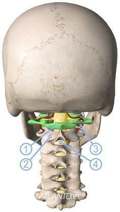 The 7 cervical vertebrae and atlas correction Health And Nutrition, Health Tips, Health Fitness, Massage Benefits, Health Benefits, Migraine, Body Systems, Anatomy And Physiology, Alternative Health