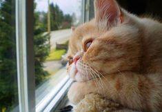 窓際で飼い主の帰りを待つ猫の憂鬱 : ハムスター速報