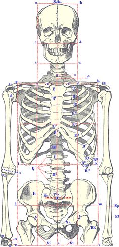 SkeletonBodyFront