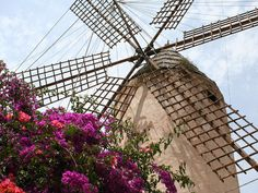mallorca Bougainvillea, Canario, Beautiful Islands, Summer Fun, Fair Grounds, Tours, Windmills, Wallpaper, Travel