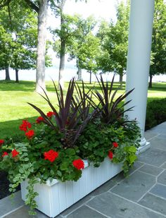 container garden, summer annuals