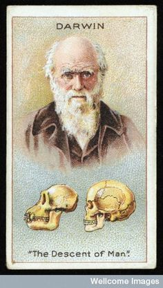 Millhoff Cigarettes, Men of Genius, Charles Darwin - The Origin of the Species. Charles Darwin, Robert Darwin, Les Religions, Natural Selection, Collector Cards, Up Book, Atheist, Science And Nature, Natural History