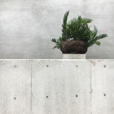 ・ curious ・ 植栽 ・ 出張で大分県、K様邸でのお仕事でした。 ・ 御世辞抜きに凄く素敵なお家の植栽をさせて頂き嬉しく思います。 ・ 今日はこれからロングランなのでまた後日詳細をpostしますので宜しくお願い致します。