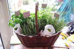 Lovely summer gift - a herb garden in a pretty basket. Just add herb scissors, a small spade and a cute card.