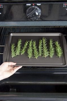 In addition to being a celebrated savory seasoning, rosemary has a time-honored tradition of medicinal and therapeutic use. For centuries, it has been used to enhance memory, promote hair growth and relieve pain and tension. Healing Herbs, Medicinal Plants, Rosemary Plant, Rosemary Ideas, Rosemary Water, Uses For Rosemary, Rosemary Recipes, Herb Recipes, Making Essential Oils