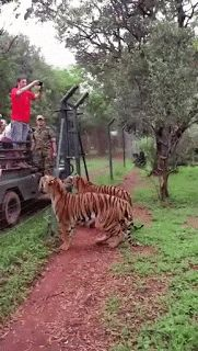 Sociolatte: Feeding the tigers