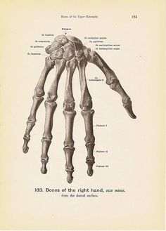 BONES of the Right Hand Engraving Anatomy Book Plate Print No. 183 and 184