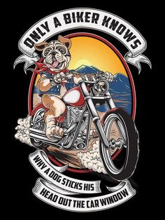 Only A Biker Knows Why A Dog Sticks His Head Out The Car Window Why does a dog stick his head out the car window? I'll tell you why... Because it feels amazing to have the wind in your face. It makes
