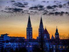 Tourinform Szeged  Repost from @ krisztian.koszo (Instagram) Cologne, Cathedral, Building, Travel, Instagram, Viajes, Buildings, Cathedrals, Destinations