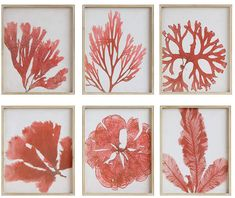 Set of 6 Pink and White Reef Coral Print Wall Art with White Wood Frames from The Well Appointed House Frame Wall Decor, Wall Art Sets, Frames On Wall, Framed Wall, Wall Décor, Wood Frames, Coral Wall Art, Coral Walls, Do It Yourself Design