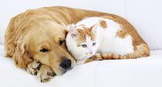 Vacinação de Cães e Gatos – Blog da Ester