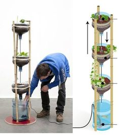 4 Easy Steps to Set-Up Your Own Backyard Aquaponics System - Tools And Tricks Club Hydroponic Farming, Aquaponics Diy, Aquaponics System, Aquaponics Greenhouse, Indoor Vegetable Gardening, Organic Gardening, Container Gardening, Herb Garden In Kitchen, Kitchen Herbs