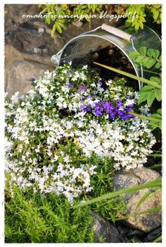 Oma koti onnenpesä: Pikkujuttuja puutarhassa