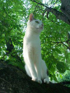 Moritz auf Walnußbaum