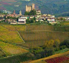 Gaja wine estate in Barbaresco, Piedmont, Italy Piedmont Wine, Piedmont Italy, Italy Trip, Italy Travel, Wine Vineyards, Italian Wine, Wine And Beer, Wineries, Wine Country