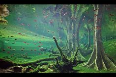 10 Tips on Designing a Freshwater Nature Aquarium Biotope Aquarium, Reef Aquarium, Planted Aquarium, Tropical Freshwater Fish, Freshwater Aquarium Fish, Tropical Fish, Aquascaping, Aquarium Landscape, Nature Aquarium