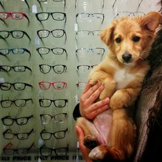"""iSee puppy  #tlv #glasses #puppiesforall"""
