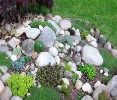 A Rock Garden Great for Low Maintenance Landscaping | beginner gardening tips