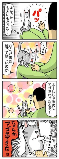 ねこのふしぎ : まめきちまめこニートの日常 Manga, Comics, Cute, Fictional Characters, Magazine, Manga Anime, Kawaii, Manga Comics, Magazines