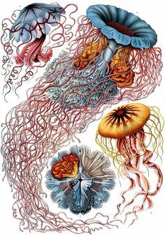 Kunstformen der Natur - Wikipedia