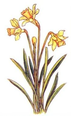 daffodils  If anyone artistic in my life wanted to draw this for me, I'd frame it and hang it in an honored place! :) thanks in advance! Love, Vanessa <3