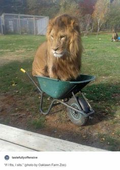 Even big cats like small containers