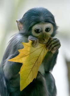 ~~it's autumn ~ ape baby by hans peters~~