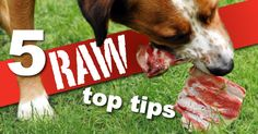 Does Feeding Your Dog Raw Seem Scary? Not With These 5 Tips! - Dogs Naturally Magazine