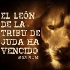 Apocalipsis 5:5 Y uno de los ancianos me dijo: No llores. He aquí que el León de la tribu de Judá, la raíz de David, ha vencido para abrir el libro y desatar sus siete sellos.♔