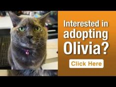 ASPCA Pet of the Week: Olivia | ASPCA - Olivia is available for adoption at the ASPCA Adoption Center. If you are interested in adopting, please call our Adoptions Department in New York City at (212) 876-7700 ext. 4120. To learn more about Olivia, please visit her profile page.  Can't adopt right now? Do the next best thing and consider making a donation to the ASPCA.
