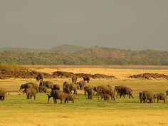 Udawalawe National Park - Attraction - Udawalawe