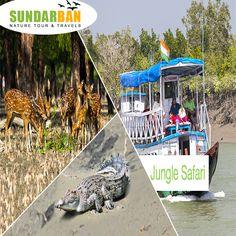 #Sunderban has a #rich and diversified #flora and #fauna. Suraj Das Mob :- 9932780889. visit: www.sundarbannaturetour.com