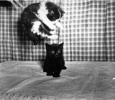 """""""Je viens de tomber sur un vieux copain, il avait l'air surpris.""""   #jacottesamuse #blague #chats #détournements #cute #funny"""