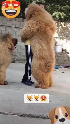 Cute Baby Dogs, Cute Funny Dogs, Cute Funny Animals, Cute Cats, Cute Wild Animals, Cute Little Animals, Animals Beautiful, Animals And Pets, Cute Animal Videos