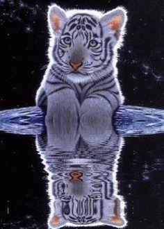 Gorgeous Tiger Cub!