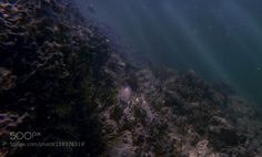 Caribbean Tang by DevinMaggio Underwater Photography Underwater World, Underwater Photography, Tango, Caribbean, Northern Lights, Boat, River, Amazing, Outdoor