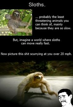 I don't like this. Now my view on sloths is a little warped.
