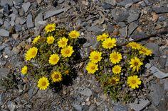 Flores amarillas | Flickr: Intercambio de fotos