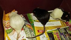 Snow , Blackie , Zoe :)