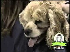Natural Pet Product Restores Life for Old Sick Dog