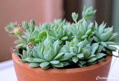 Potted Plants, Indoor Plants, Suculentas Interior, Cactus Y Suculentas, Plantar, All Flowers, Color Splash, House Plants, Succulents
