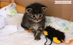 4 week old Kitten | www.youdid-design.de