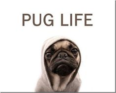 Pug Life. This one is for @Lindzee McCain :)