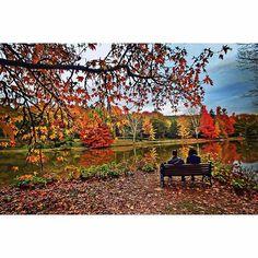 Atatürk Arboretumu / Sonbahar  Fotoğraf: Özensel Akarsu