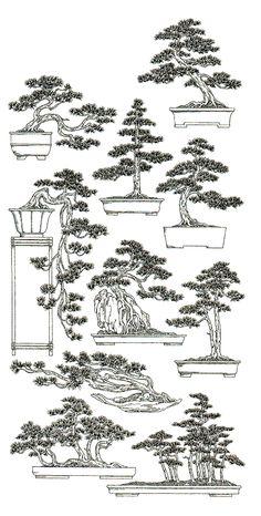 Shape & styles of bonsai tree