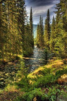 Johnston Creek (Banff, Alberta) by Ken Kamensky