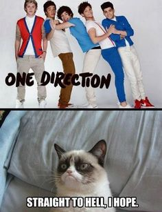 grumpy cat meme | Grumpy Cat vs One Direction. Grumpy Cat wins